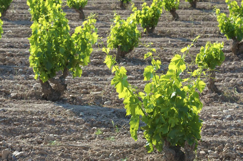 Los mejores vinos de Aragón